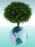 Tree growing from a globe. A Tree growing from a globe Stock Image