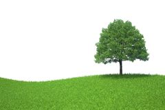 Tree growing on a green meadow isolated on white b Stock Image