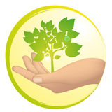 Tree growing in a hand Stock Photos