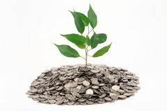 Tree growing from a heap of coin. Tree with green leaves growing from a heap of coins Stock Images