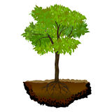 Tree Growing In The Soil Royalty Free Stock Photo