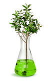 Tree growing in laboratory test beaker Stock Photos
