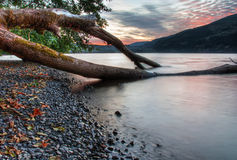 Tree Growing into Lake with Sunset in Background Royalty Free Stock Photo