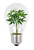 Tree growing in a lamp Stock Photos