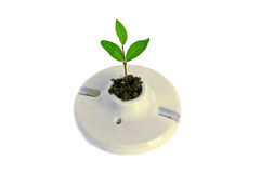 Tree Growing From a Light Socket Royalty Free Stock Photos