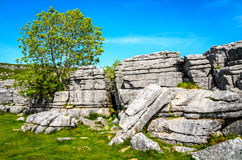 Tree growing from limestone pavement. stock image