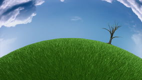Tree growing on meadow,fish eye view,time-lapse clouds, stock footage. Video stock footage