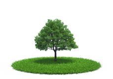 Tree growing on meadow Royalty Free Stock Photo