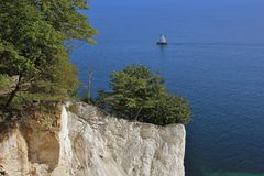 Tree growing on Moens klint. Limestone cliff. Stock Image