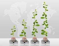 Tree growing in money Royalty Free Stock Photography