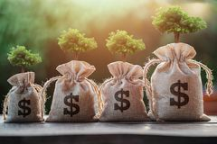 Tree growing on money bag. concept saving. Gold, business, success, loan, dollar, bank, rich, payment, coins, transfer, charity, investment, background royalty free stock photos