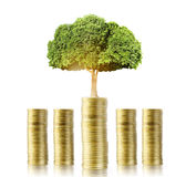 Tree growing from money Stock Image