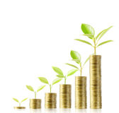 Tree growing from money Stock Photography