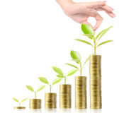 Tree growing from money Royalty Free Stock Photo