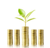 Tree growing from money Stock Photo