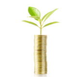 Tree growing from money Royalty Free Stock Photos