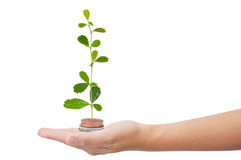 Tree growing in money on hand Royalty Free Stock Photos