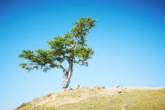 Tree growing at mountain top Stock Images