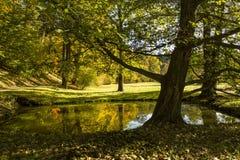 Tree Growing near Lake,sunny autumn day. Royalty Free Stock Image