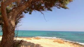 Tree growing near the sea. Tree growing close to the sea stock video