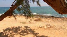 Tree growing near the sea stock video