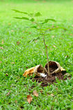 Tree growing with nutrient Stock Photo