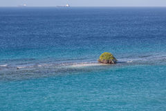 Tree Growing in Ocean Royalty Free Stock Photos