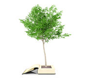 Tree growing from the old book. Knowledge growth from education concept. Stock Image