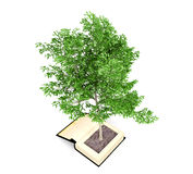Tree growing from the old book. Knowledge growth from education concept. Royalty Free Stock Photography