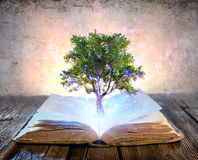 Tree Growing From The Old Book Stock Photo