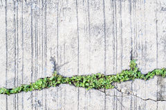 Tree Growing On The Crack Concrete Floor Royalty Free Stock Image