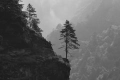 Tree Growing On The Edge Of A Cliff Royalty Free Stock Photography
