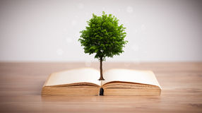 Tree growing from an open book Royalty Free Stock Image