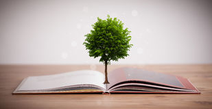Tree growing from an open book Royalty Free Stock Photos