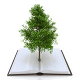Tree growing from an open book, alternative recycling concept Stock Images