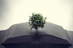 Tree growing from an open book. Education, imagination, creativity Stock Photography