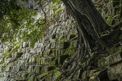Tree growing out of an ancient mayan staircase Stock Image
