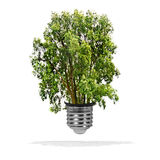 Tree growing out of bulb - green energy eco concept Royalty Free Stock Photography