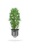 Tree growing out of bulb - green energy eco concept Royalty Free Stock Photos