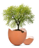 Tree growing out of the egg Royalty Free Stock Photo