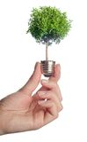 Tree growing out of electric light bulb. Stock Images