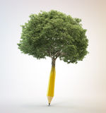 Tree growing out of a pencil Royalty Free Stock Image