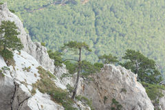 Tree growing out of the rock. Crimea. Stock Image