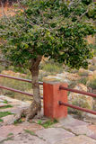 Tree growing out of stone path in Jaigarh Fort near Jaipur, Raja Stock Photo
