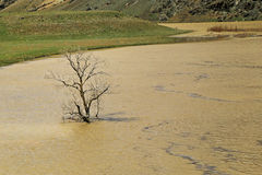 Tree growing out of the water. Royalty Free Stock Photos