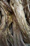 Tree growing over buddha Stock Photography