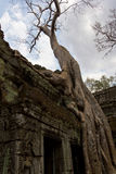 Tree growing over Ta Prohm entrance Stock Photography