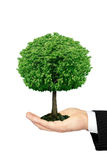 Tree growing on the palm is isolated on a white background Stock Images