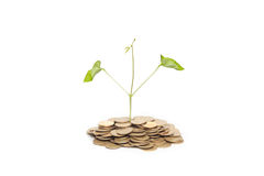 Tree growing from pile of coins Royalty Free Stock Photography