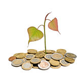 Tree growing from pile of coins Stock Photography